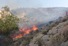 خسارت ۱۰۰ هکتاری آتش به خائیز تنگستان / آتش در ارتفاعات ادامه دارد