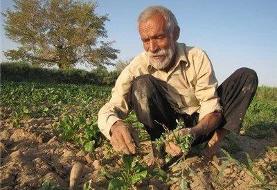 خسارت ۶۹۸ میلیاردی کرونا به بخش کشاورزی استان مرکزی
