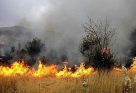 ۲ هکتار از جنگل پارک ملی دز در آتش سوخت