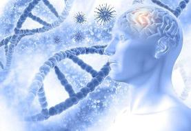 ژن زوال عقل ریسک ابتلا به بیماری کووید ۱۹ را افزایش می دهد