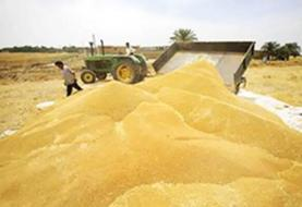 خرید ۱۵ هزار تن گندم از کشاورزان لرستان