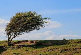 هشدار وزش باد شدید در شرق و جنوب شرق کشور