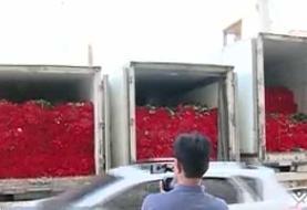 فیلم | ماجرای مهریه یک میلیون شاخه گل در کرمان چه بود؟