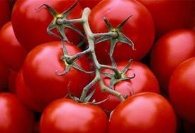 خرید حمایتی گوجه فرنگی از کشاورزان امروز آغاز میشود