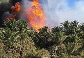 نخیلات ۲ روستای دشتستان بوشهر آتش گرفت
