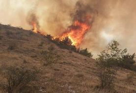 بالگردها به داد جنگلهای شعلهور در آتش نمیرسند