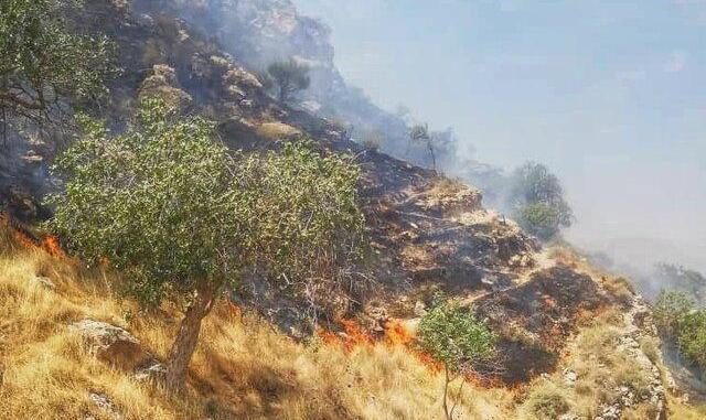 آتش بیتوجهی بر پیکر طبیعت جنوب در ارتفاعات دشتستان و بالگردهایی که نرسیده خراب میشوند!