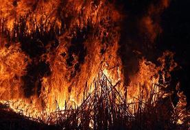 هشدار محیطزیست | آتشسوزی در کمین جنگلها و مراتع مازندران