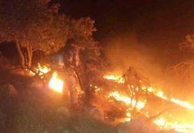 تازیانه آتش بر حیات وحش خائیز/ زاگرس داغدار بلوطها