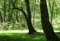 جنگل&#۸۲۰۴;ها را به حال خود رها نكنیم