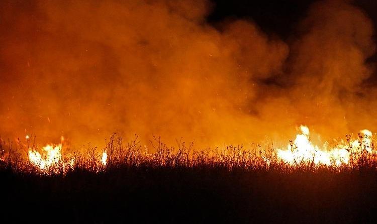 ویدیو: جزئیات آتش سوزی بوستان ولایت؛ هزار متر از حاشیه بوستان در آتش سوخت