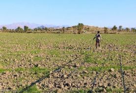 خام فروشی محصولات؛ مهمترین مشکل بخش کشاورزی زنجان