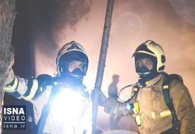 ویدئو/ خاموشی آتشی که به جان درختان چیتگر تهران افتاد