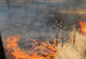 ۲ هزار متر از عرصههای جنگلی چیتگر تهران در آتش سوخت