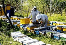 شیرینی عسل و کام تلخ زنبورداران شاهرود