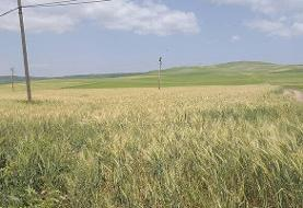 انتخاب قزوین به عنوان پایلوت طرح حسابرسی آب کشاورزی