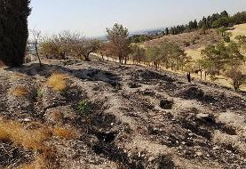 آتش سوزی بوستان چیتگر تهران عمدی بود! ماجرای اموال پلیاتیلن چیست؟