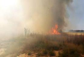 آتشسوزی در ۹۵ هکتار از مزارع آبی شهرستان چرام