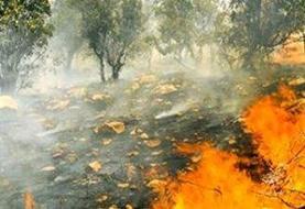 چرا اراده ای برای حفاظت از جنگل ها و مراتع ایران نیست؟