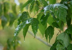 رگبار باران در شمال غرب و جنوب شرق | افزایش دما در پایتخت