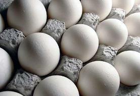 حداکثر قیمت هر کیلوگرم تخم مرغ فله برای مصرف کننده ۱۴ هزار و ۵۰۰ تومان