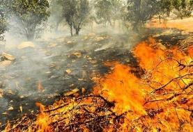 سازمان جنگل ها: '۴۰ درصد' از خائیز زاگرس در آتشسوزی آسیب دید
