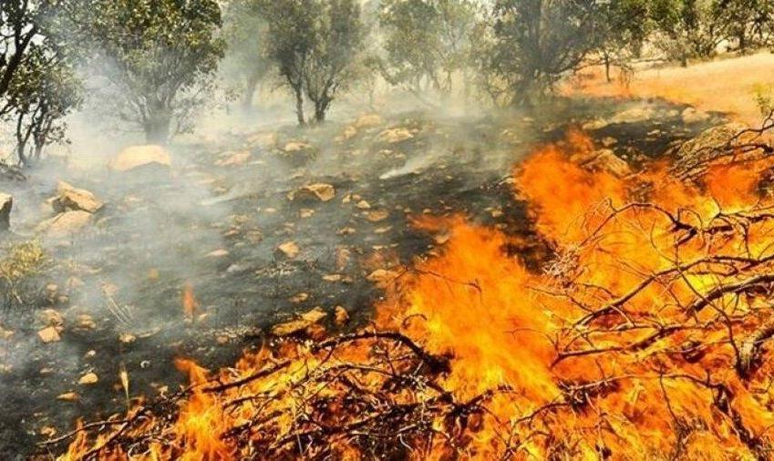سازمان جنگل ها: ۴۰ درصد از خائیز زاگرس در آتشسوزی آسیب دید