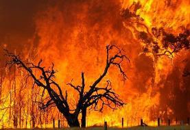 هشدار سازمان جنگلها |  افزایش خطر آتشسوزی در جنگلهای شمال کشور