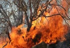 پتانسیل بالای وقوع آتشسوزی در جنگلهای شمال کشور