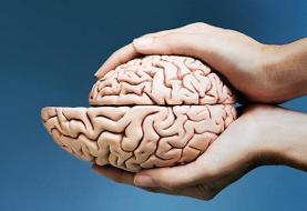 وقتی مغز کوچک میشود!