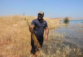 زمینهای کشاورزی روستاهای اطراف سد گتوند همچنان زیر آب