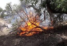وقوع آتشسوزی در جنگلهای اندیکا/ اعزام بالگرد آبپاش برای مهار آتش