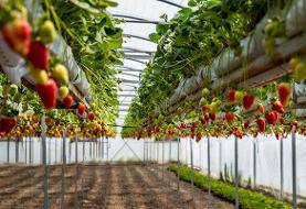 توسعه گلخانههای استاندارد پاکترین اشتغالزایی است