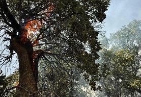 دستور رسیدگی فوری به حیاتوحش آسیب دیده در آتشسوزی جنگلهای زاگرس