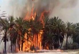 ۵۵۰ اصله درخت خرما در آتش سوخت