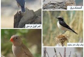 مشاهده ۵ گونه پرنده برای اولین بار در استان مرکزی