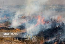 آتش سوزی میکروفلورها و باکتریهای موجود در خاک را ازبین میبرد
