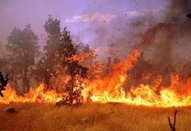 ۲۵ هکتار جنگل عامری دیلم در آتش سوخت
