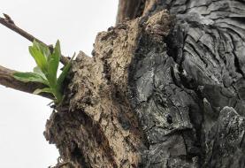 سه دقیقه تا پایان بشریت/ بدون جنگل ها تا کی دوام می آوریم؟