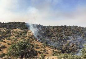 آتشسوزی در جنگلهای بلوط باغملک مهار شد