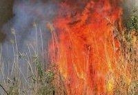 وقوع آتش&#۸۲۰۴;سوزی&#۸۲۰۴; در جنگل&#۸۲۰۴;های بلوط باغملک