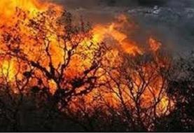 فیلم | افزایش آتشسوزی در جنگلها و مراتع دهلران