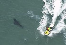 10-foot great white shark kills surfer in Australia