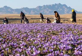 توسعه اقتصادی خراسان جنوبی با رونق کشاورزی