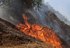 سازمان جنگل ها: ۴۰ نفر در ارتباط با آتشسوزیهای عمدی اخیر دستگیر شدند