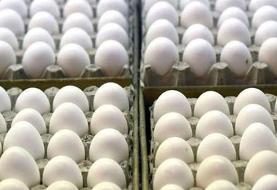 قیمت هر شانه تخم مرغ کمتر از ۲۰ هزار تومان