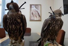 دستگیری قاچاقچیان پرندگان شکاری در مازندران