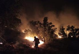 مهار آتش سوزی جنگلها