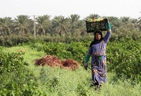 فیلم | آشنایی با روستای غزوایه - اهواز