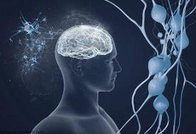 ارائه آخرین یافتههای درمانی عصب روانپزشکی در یک وبینار علمی